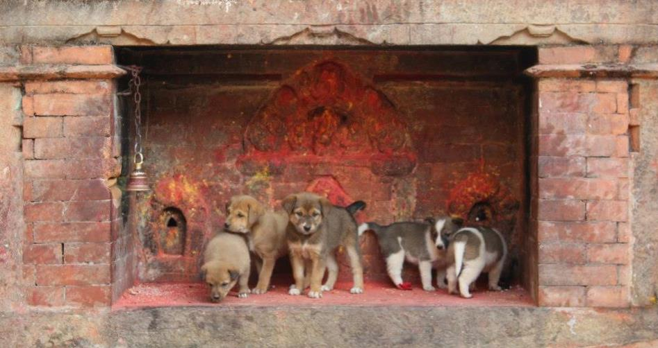 A shrine full of puppies!